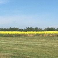 TAYLOR: Can Rural Alberta be Flipped?